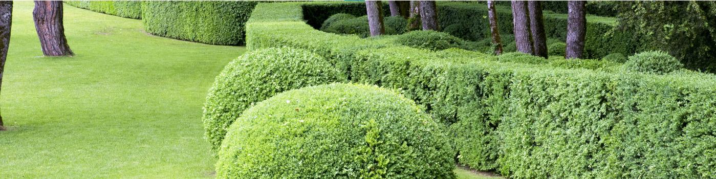 entretien de jardin à saint-omer